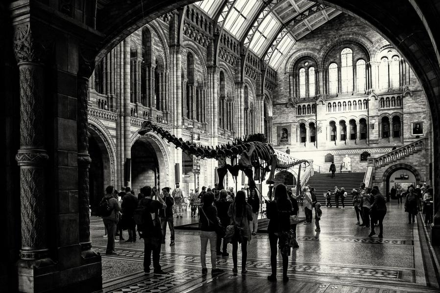 8 choses à voir et à faire au Natural History Museum de Londres !