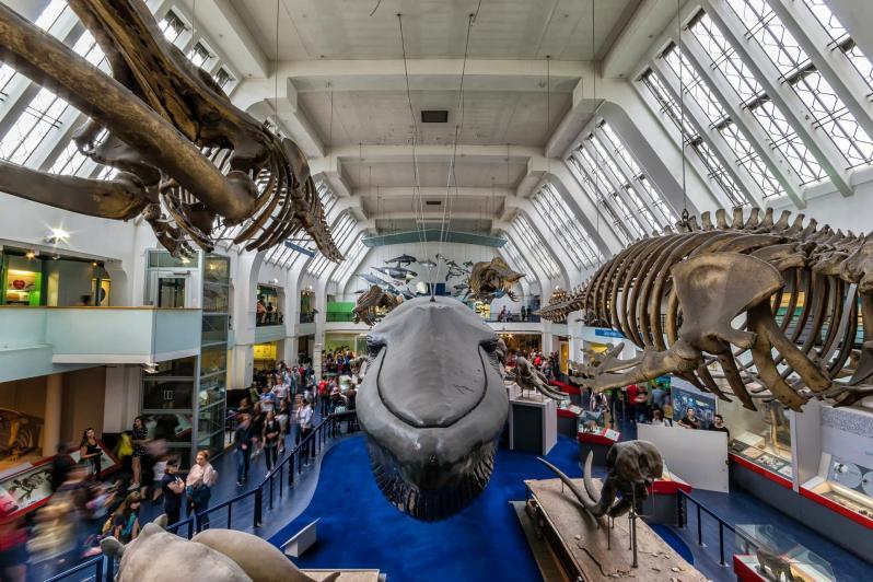8 choses à voir et à faire au Natural History Museum de Londres !