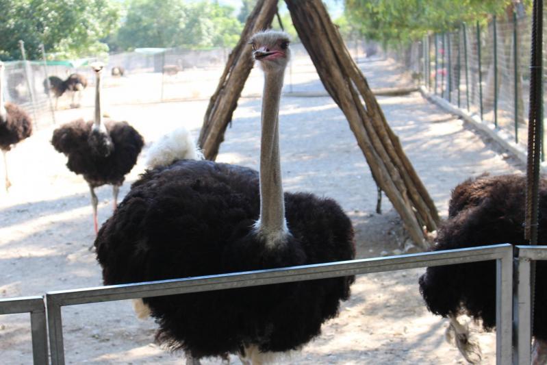 Une visite surprenant à Farma of Rhodos