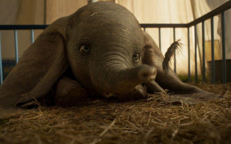 Quand Tim Burton fait s'envoler Dumbo !
