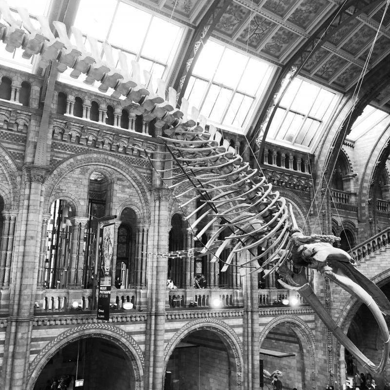 Le Musée d'histoire Naturelle de Londres, une visite incontournable