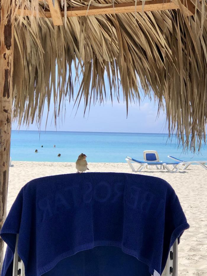 Apologie de la paresse (guide méthodologique pour les vacances)