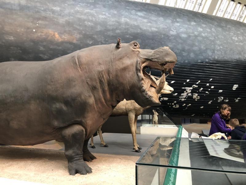 Le natural History Museum de Londres : une visite incontournable