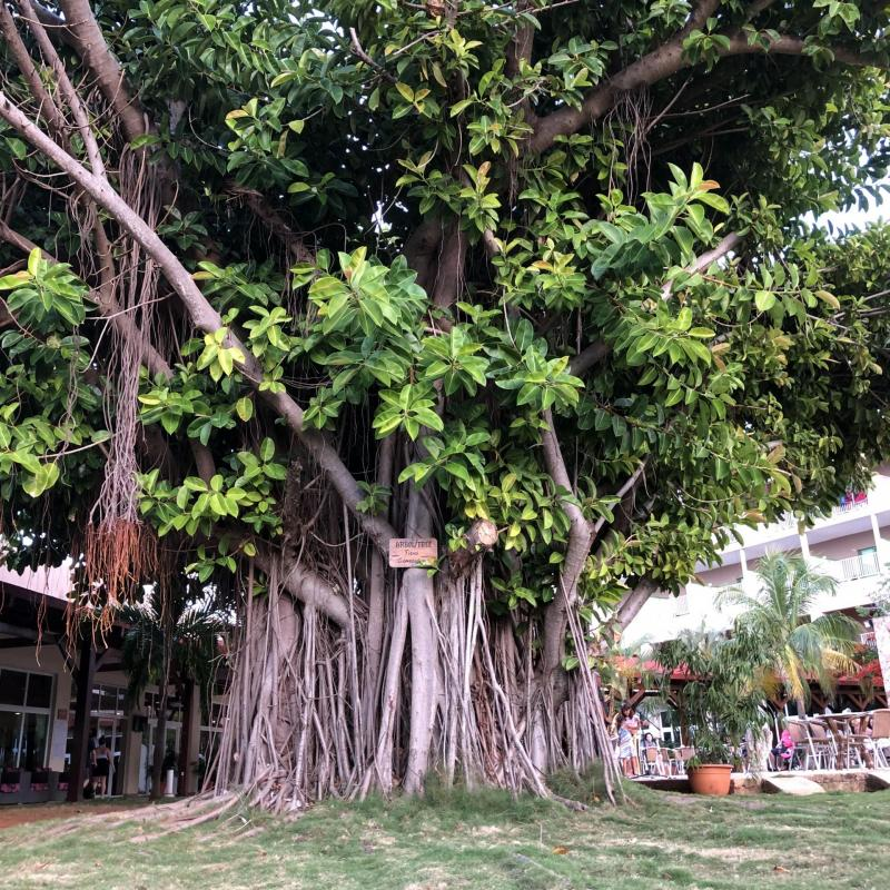 L'hôtel Iberostar Tainos à Varadero [CUBA] : avis et photos