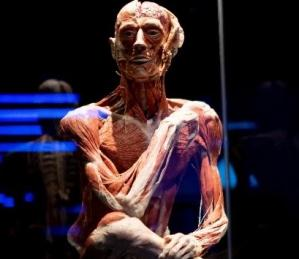 Notre visite au Body Worlds London
