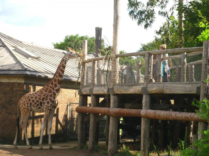 London zoo, london for kids