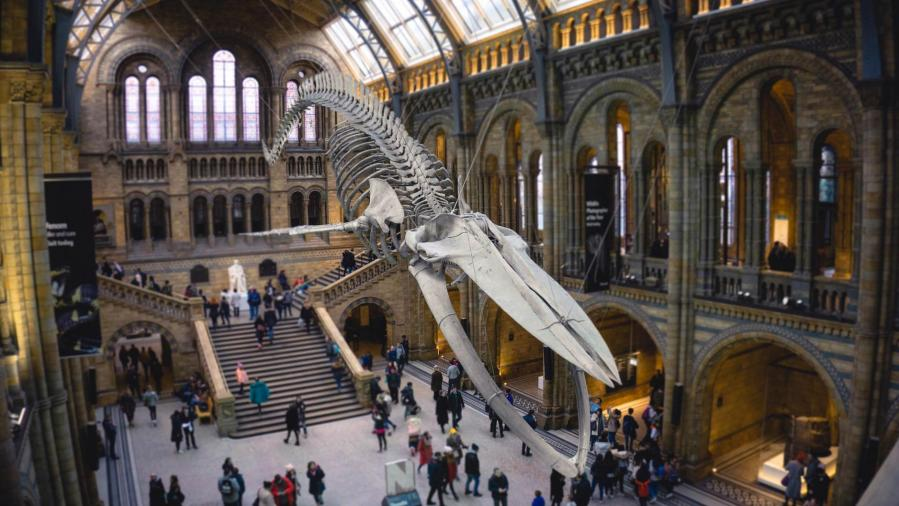 8 choses à voir et à faire au NHM de London